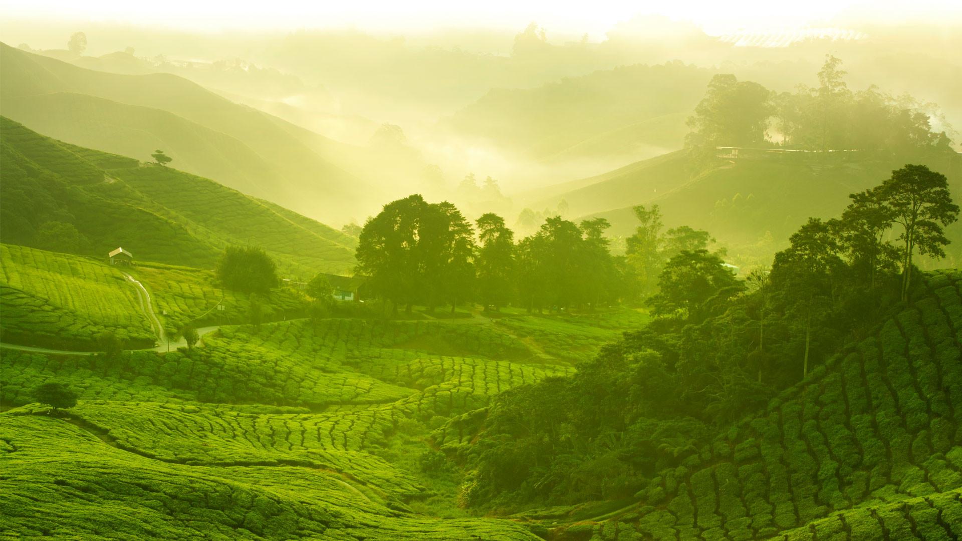 Matcha Tea Top 10 Health Benefits A Amp E Magazine